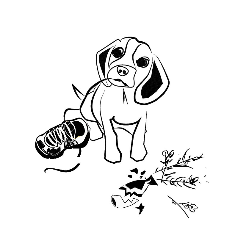 אלכסנדר גור כלבים